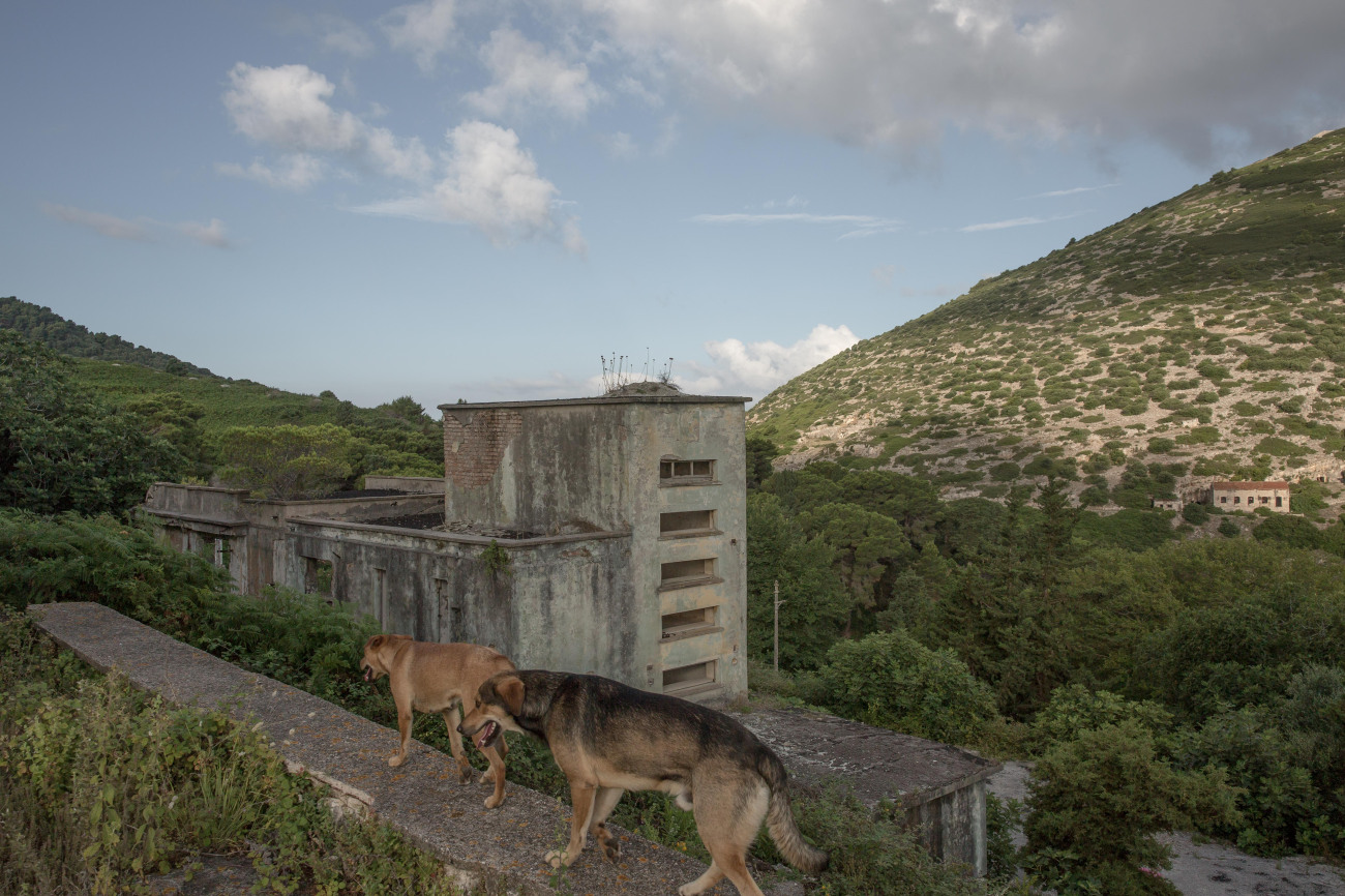 Two dogs walk through derelict buildings on the Albanian island of Sazan.
