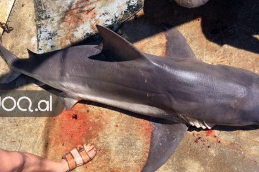 durres-peshkaqen-586x350-527x350